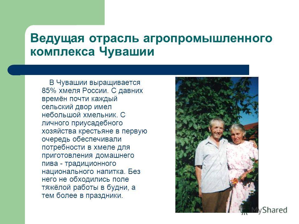 Ведущая отрасль агропромышленного комплекса Чувашии В Чувашии выращивается 85% хмеля России. С давних времён почти каждый сельский двор имел небольшой хмельник. С личного приусадебного хозяйства крестьяне в первую очередь обеспечивали потребности в х