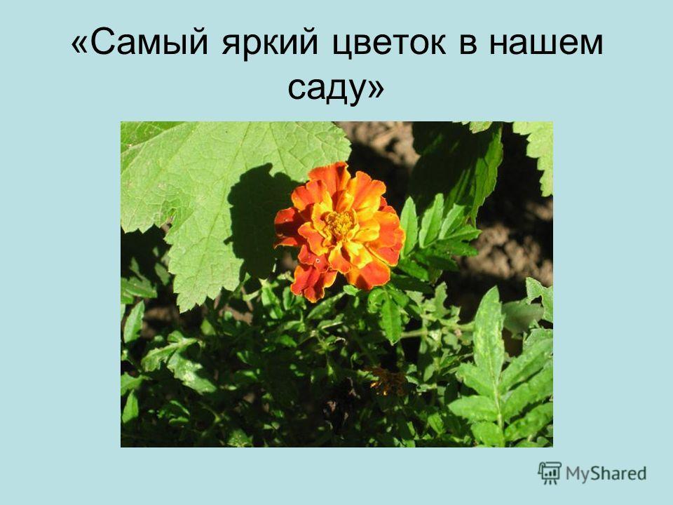 «Самый яркий цветок в нашем саду»
