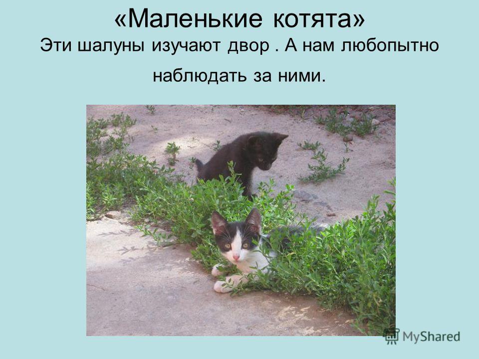 «Маленькие котята» Эти шалуны изучают двор. А нам любопытно наблюдать за ними.