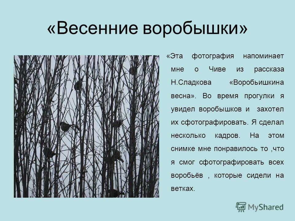 «Весенние воробышки» «Эта фотография напоминает мне о Чиве из рассказа Н.Сладкова «Воробьишкина весна». Во время прогулки я увидел воробышков и захотел их сфотографировать. Я сделал несколько кадров. На этом снимке мне понравилось то,что я смог сфото