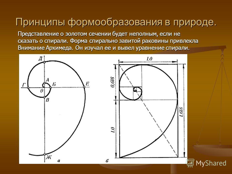 Принципы формообразования в природе. Представление о золотом сечении будет неполным, если не сказать о спирали. Форма спирально завитой раковины привлекла Внимание Архимеда. Он изучал ее и вывел уравнение спирали.