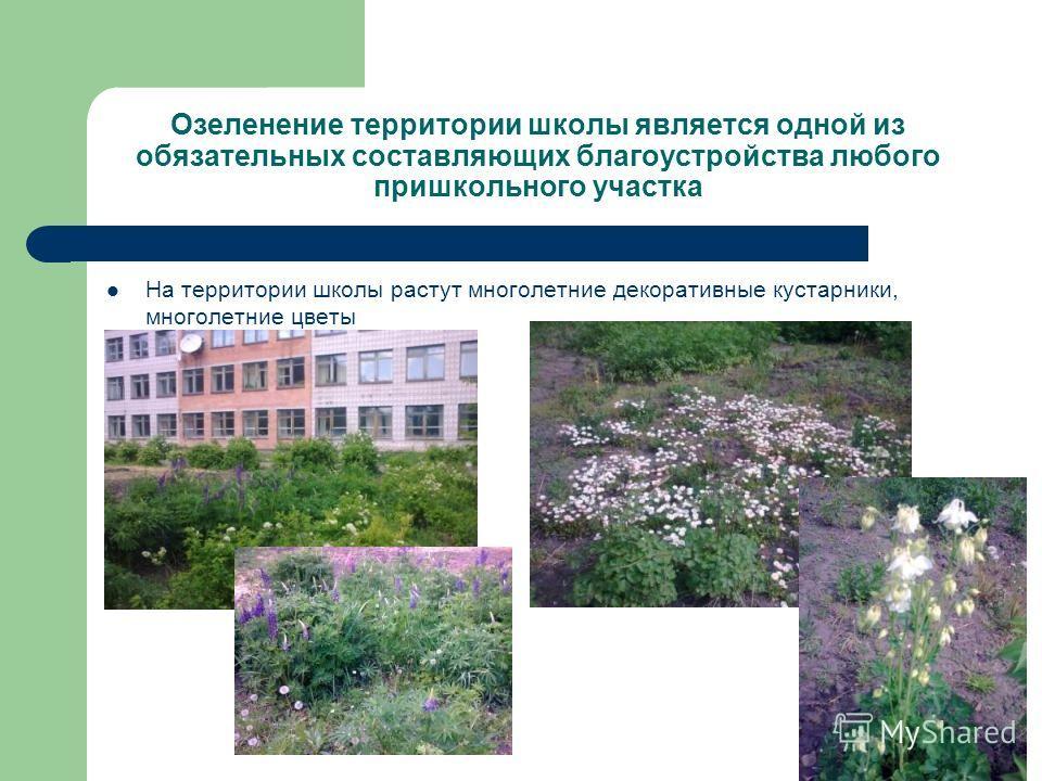 Озеленение территории школы является одной из обязательных составляющих благоустройства любого пришкольного участка На территории школы растут многолетние декоративные кустарники, многолетние цветы Люпины маргаритки