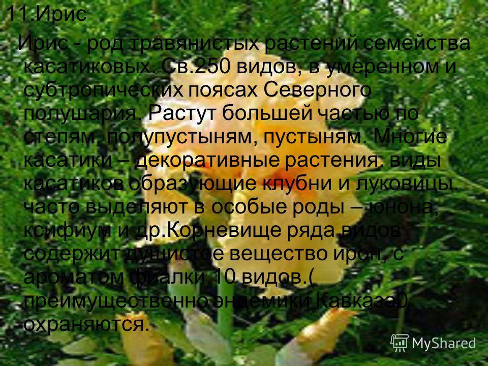11.Ирис Ирис - род травянистых растений семейства касатиковых. Св.250 видов, в умеренном и субтропических поясах Северного полушария. Растут большей частью по степям, полупустыням, пустыням. Многие касатики – декоративные растения. виды касатиков обр