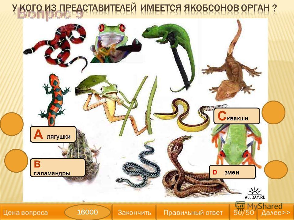 D змеи А лягушки В саламандры С квакши 16000
