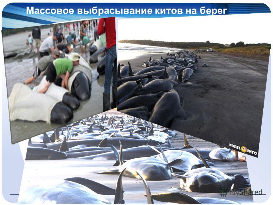 Массовое выбрасывание китов на берег