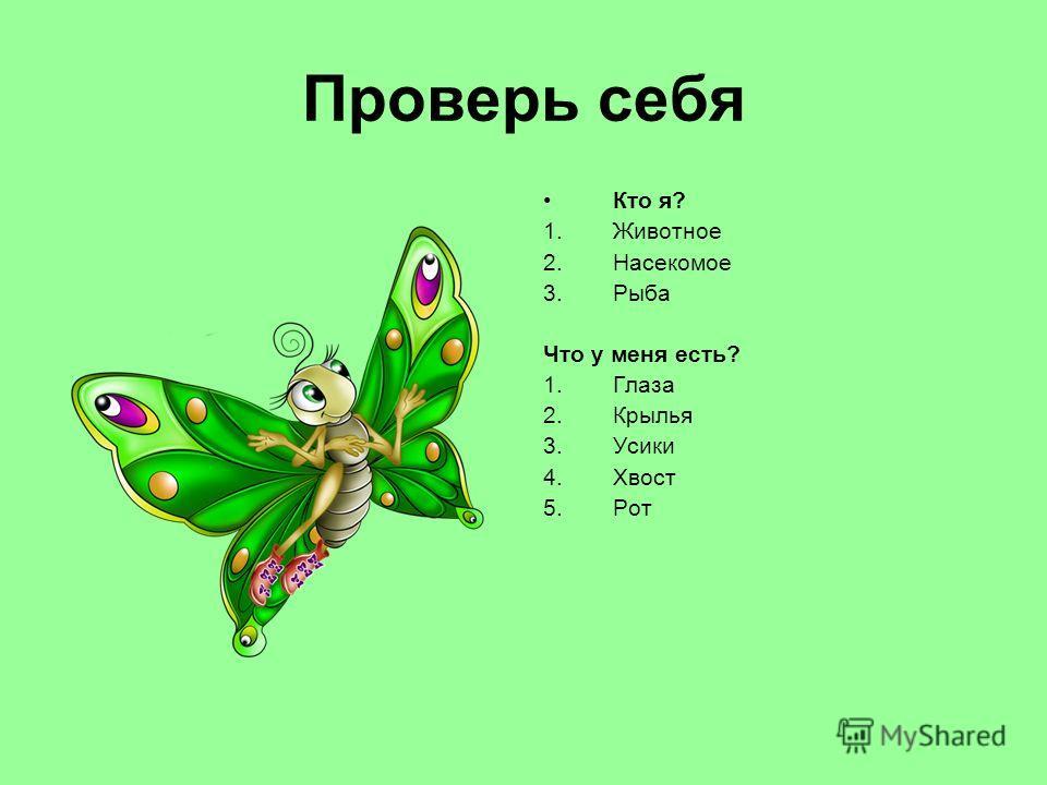 Проверь себя Кто я? 1.Животное 2.Насекомое 3.Рыба Что у меня есть? 1.Глаза 2.Крылья 3.Усики 4.Хвост 5.Рот
