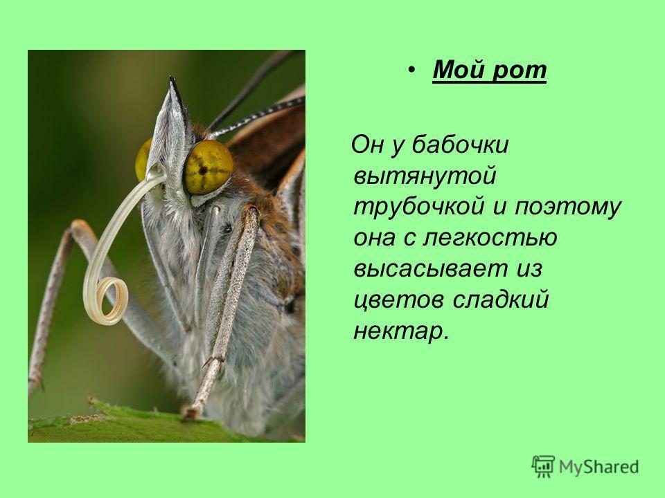 Мой рот Он у бабочки вытянутой трубочкой и поэтому она с легкостью высасывает из цветов сладкий нектар.