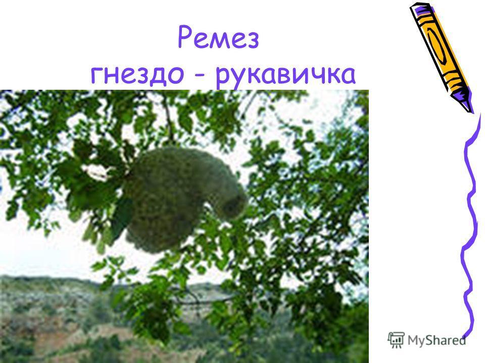 Ремез гнездо - рукавичка