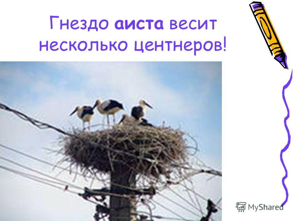 Гнездо аиста весит несколько центнеров!