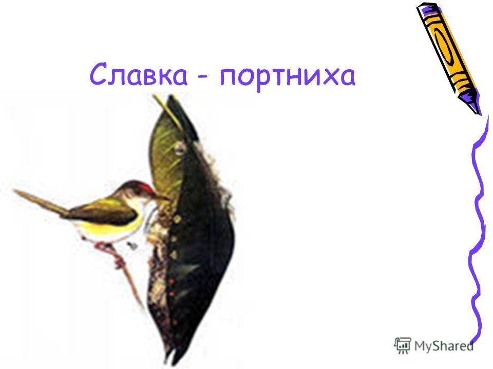 Славка - портниха