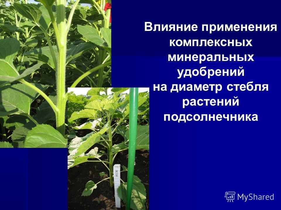 Влияние применения комплексных минеральных удобрений на диаметр стебля растений подсолнечника