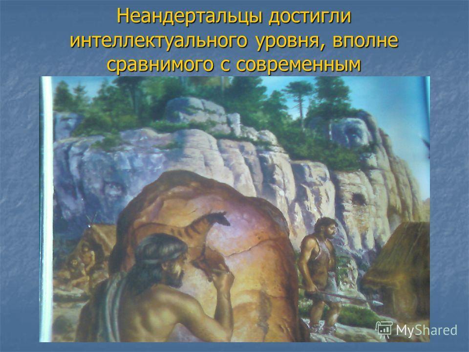 Неандертальцы достигли интеллектуального уровня, вполне сравнимого с современным