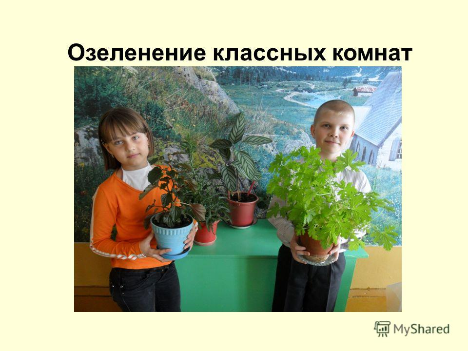 Озеленение классных комнат