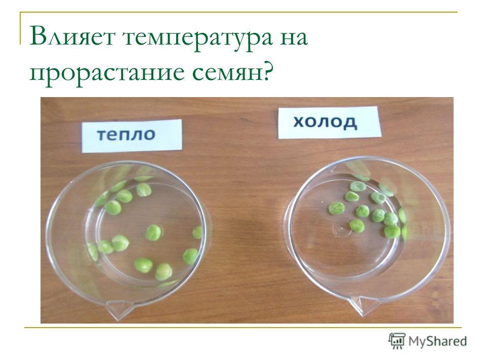 Влияет температура на прорастание семян?