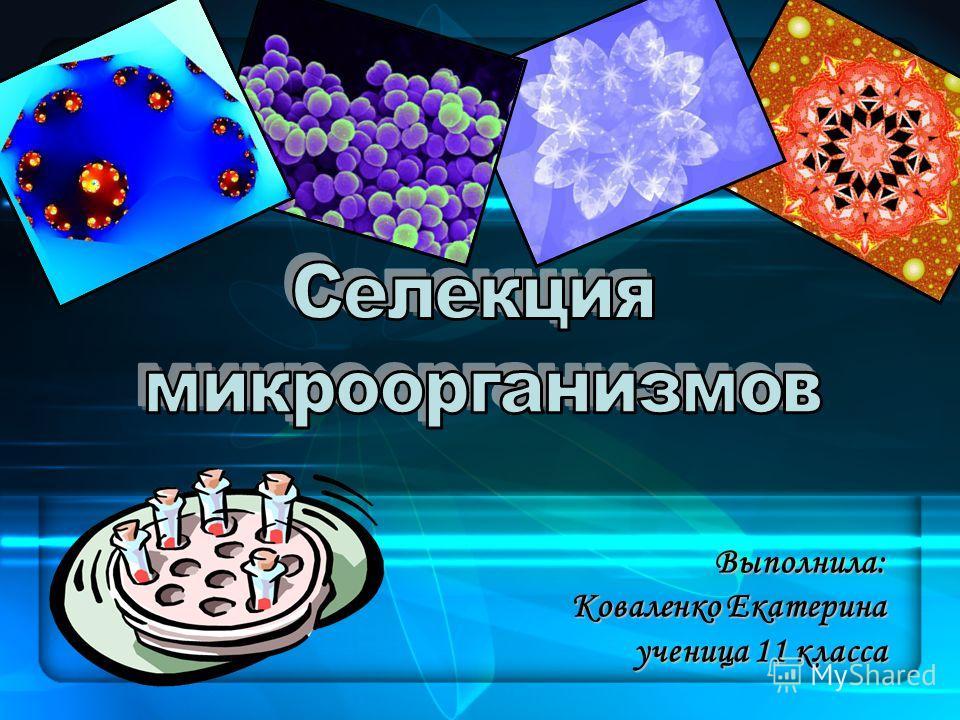 Выполнила: Коваленко Екатерина ученица 11 класса