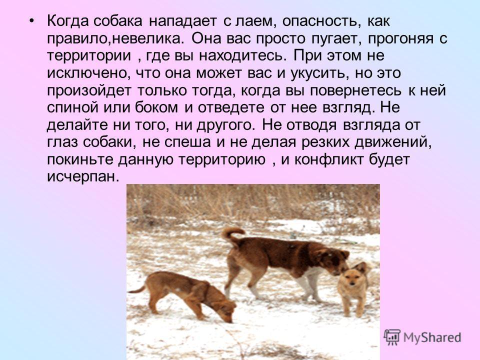 Когда собака нападает с лаем, опасность, как правило,невелика. Она вас просто пугает, прогоняя с территории, где вы находитесь. При этом не исключено, что она может вас и укусить, но это произойдет только тогда, когда вы повернетесь к ней спиной или