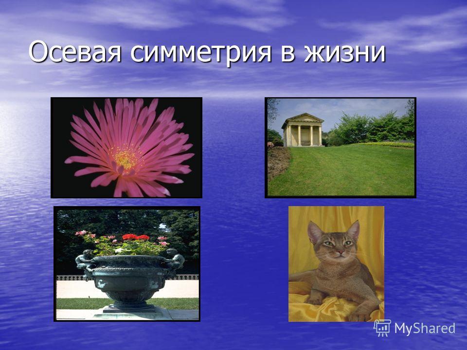Осевая симметрия в жизни