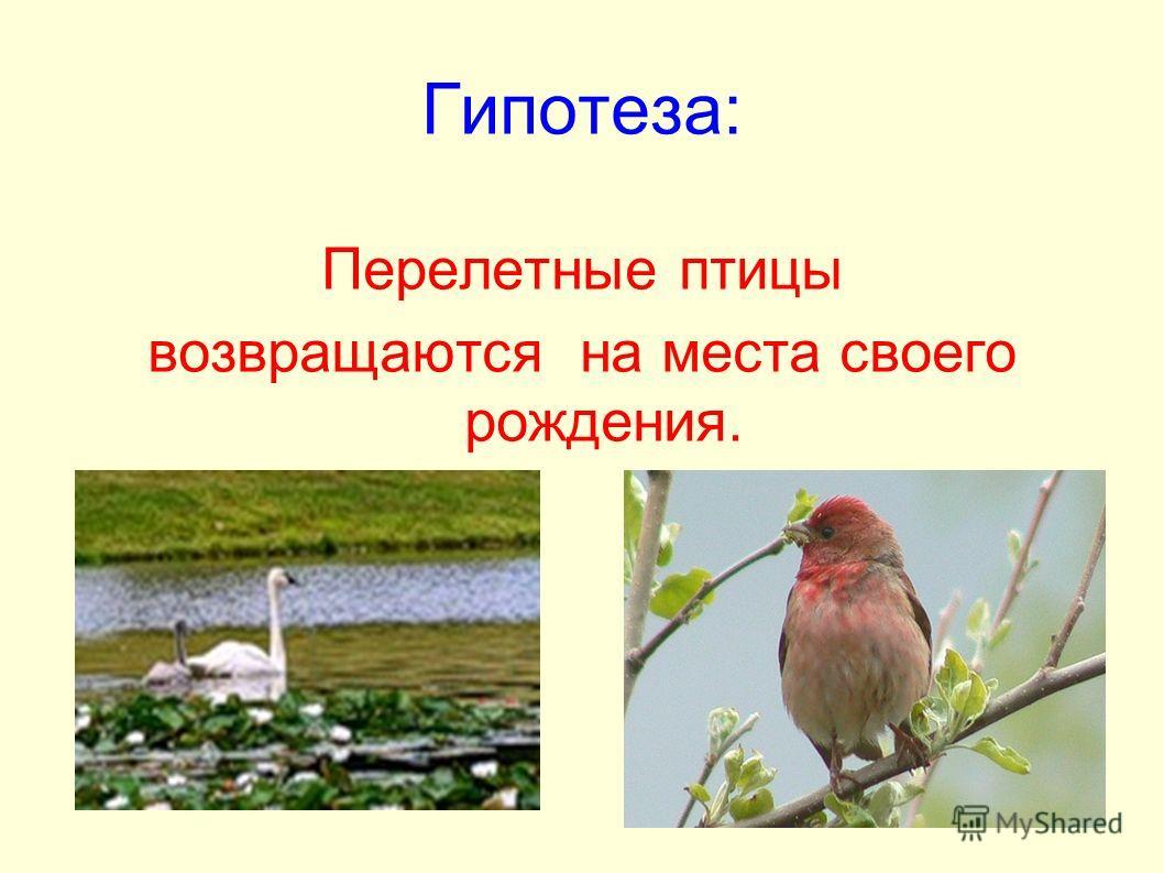 Гипотеза: Перелетные птицы возвращаются на места своего рождения.