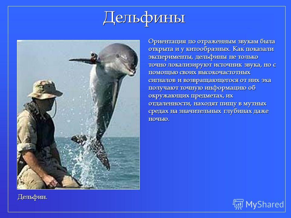 Дельфины Ориентация по отраженным звукам была открыта и у китообразных. Как показали эксперименты, дельфины не только точно локализируют источник звука, но с помощью своих высокочастотных сигналов и возвращающегося от них эха получают точную информац