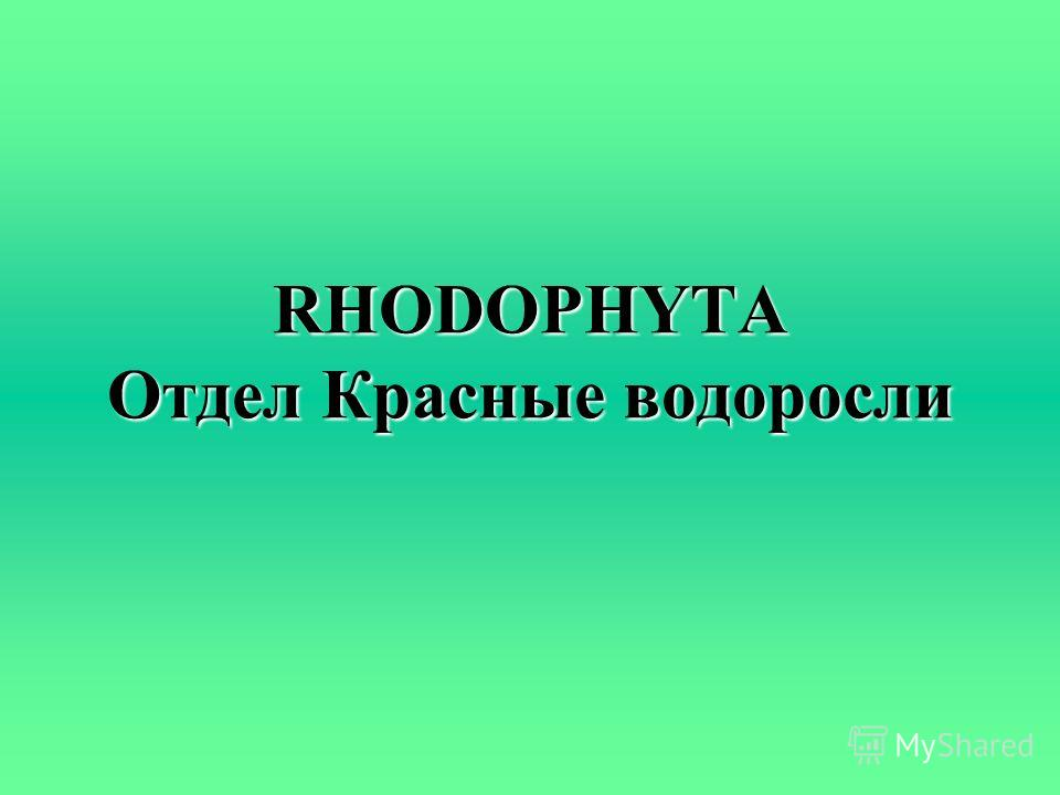 RHODOPHYTA Отдел Красные водоросли