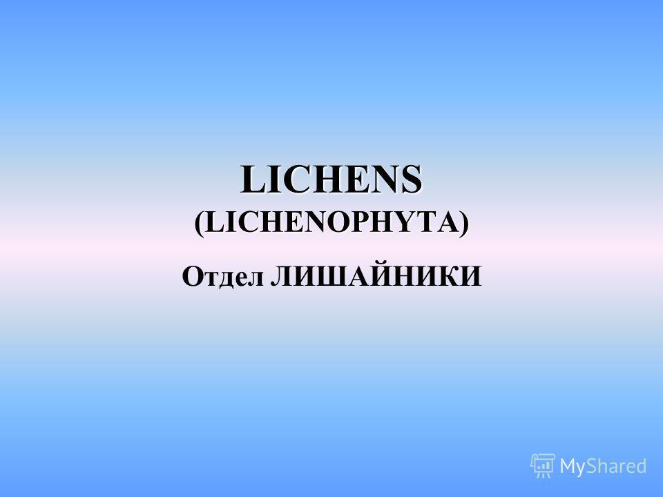 LICHENS (LICHENOPHYTA) Отдел ЛИШАЙНИКИ
