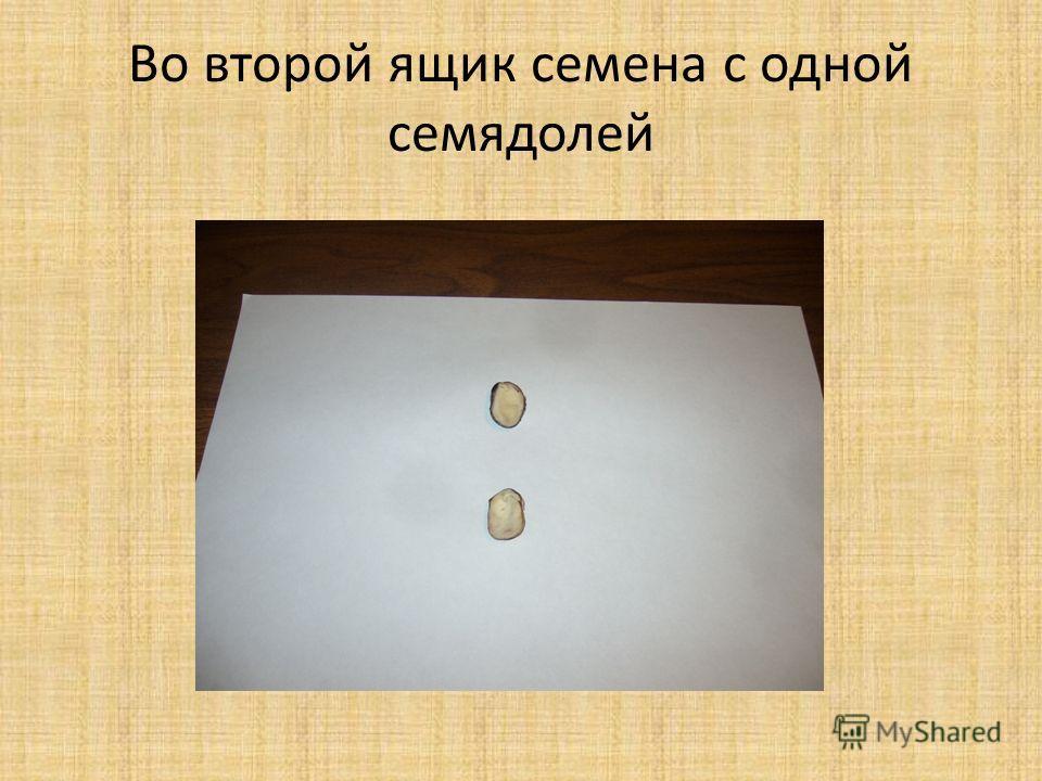 Во второй ящик семена с одной семядолей