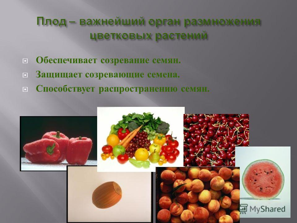 "Презентация на тему: ""Тема урока: «Распространение плодов ... Крылатка Клена"