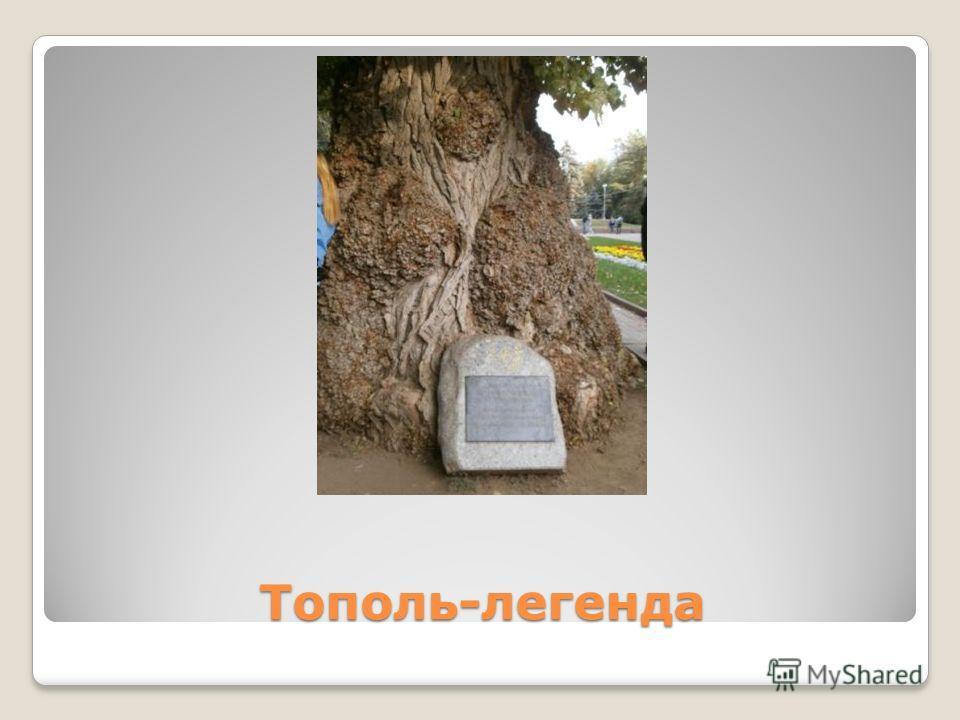 Тополь-легенда
