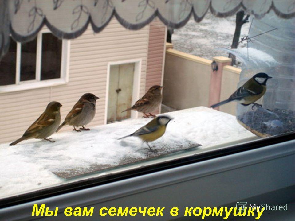 Птички ростом невелички.