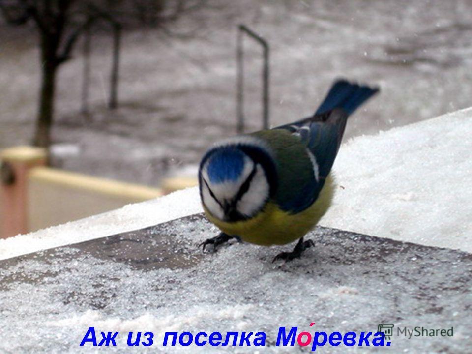 Прилетела Лазо́ревка
