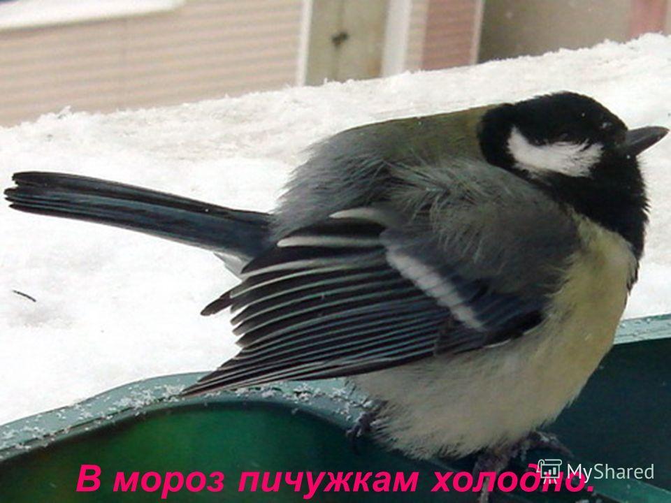 Зимой синичкам голодно.