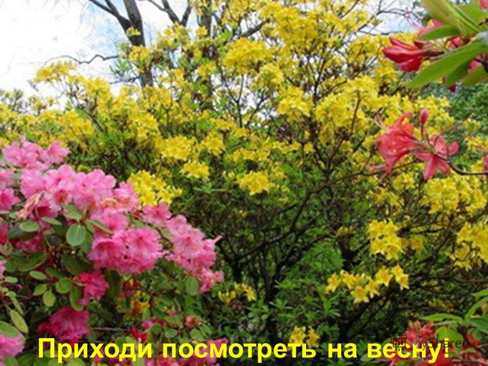 Приходи посмотреть на весну!