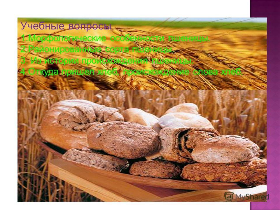 Учебные вопросы 1.Морфологические особенности пшеницы. 2.Районированные сорта пшеницы. 3. Из истории происхождения пшеницы. 4.Откуда пришел хлеб, происхождение слова хлеб.