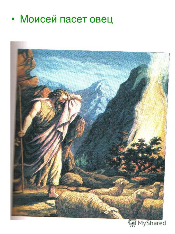 Моисей пасет овец