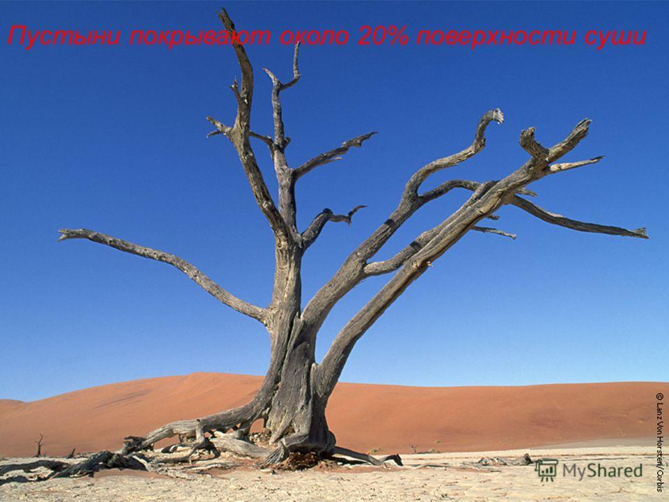 Пустыни покрывают около 20% поверхности суши