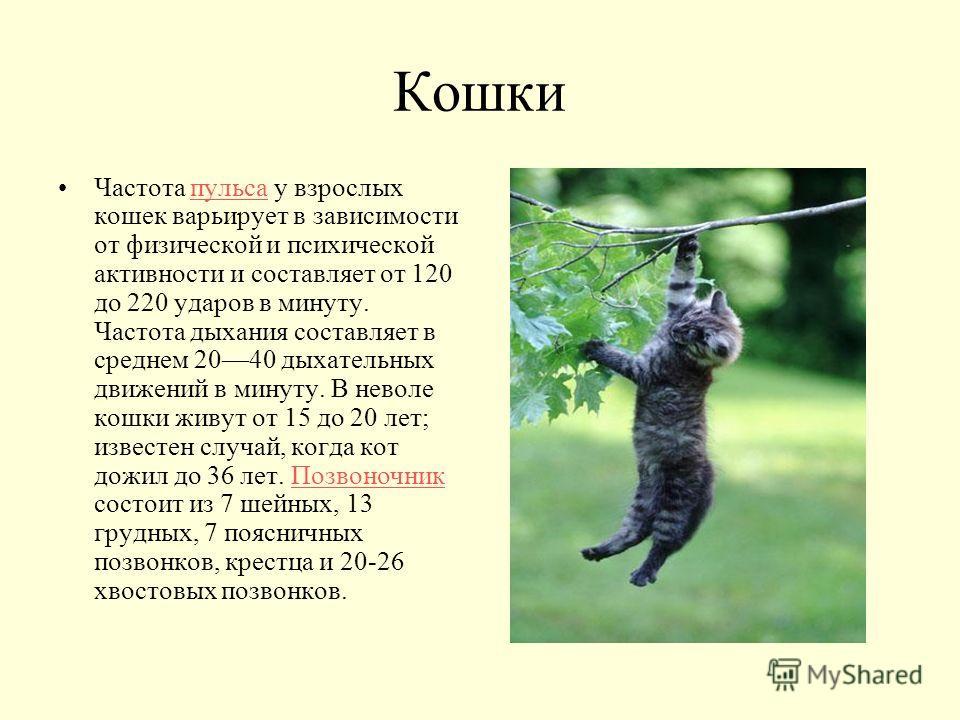 Кошки Частота пульса у взрослых кошек варьирует в зависимости от физической и психической активности и составляет от 120 до 220 ударов в минуту. Частота дыхания составляет в среднем 2040 дыхательных движений в минуту. В неволе кошки живут от 15 до 20