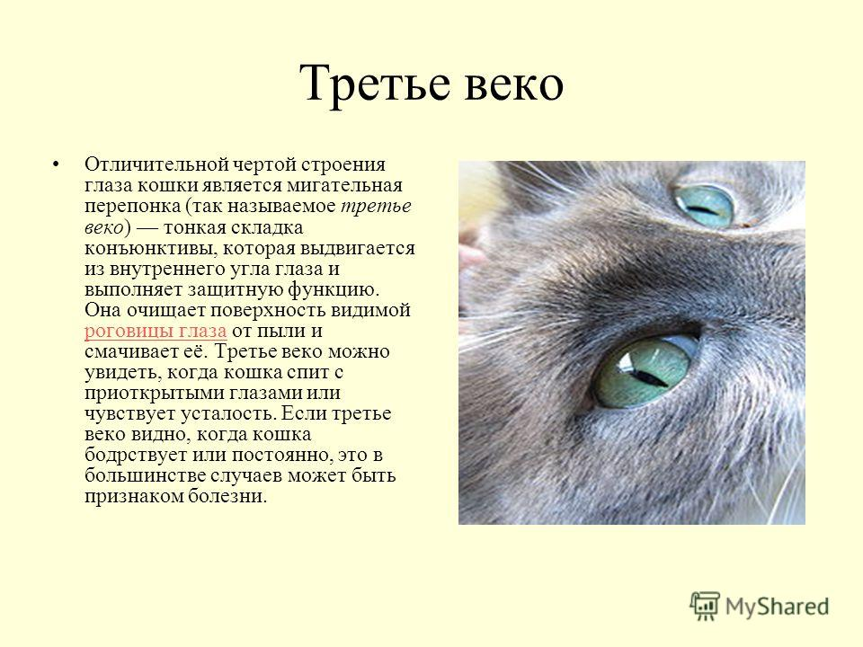 Anatomy of a cats eye 576124 - follow4more.info