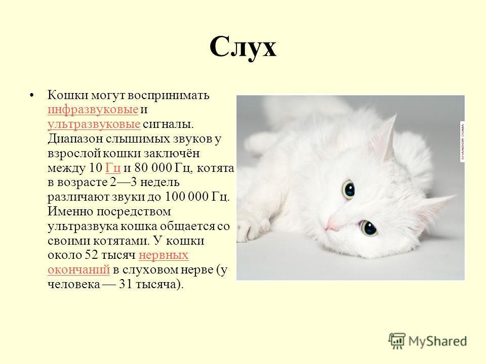 Слух Кошки могут воспринимать инфразвуковые и ультразвуковые сигналы. Диапазон слышимых звуков у взрослой кошки заключён между 10 Гц и 80 000 Гц, котята в возрасте 23 недель различают звуки до 100 000 Гц. Именно посредством ультразвука кошка общается