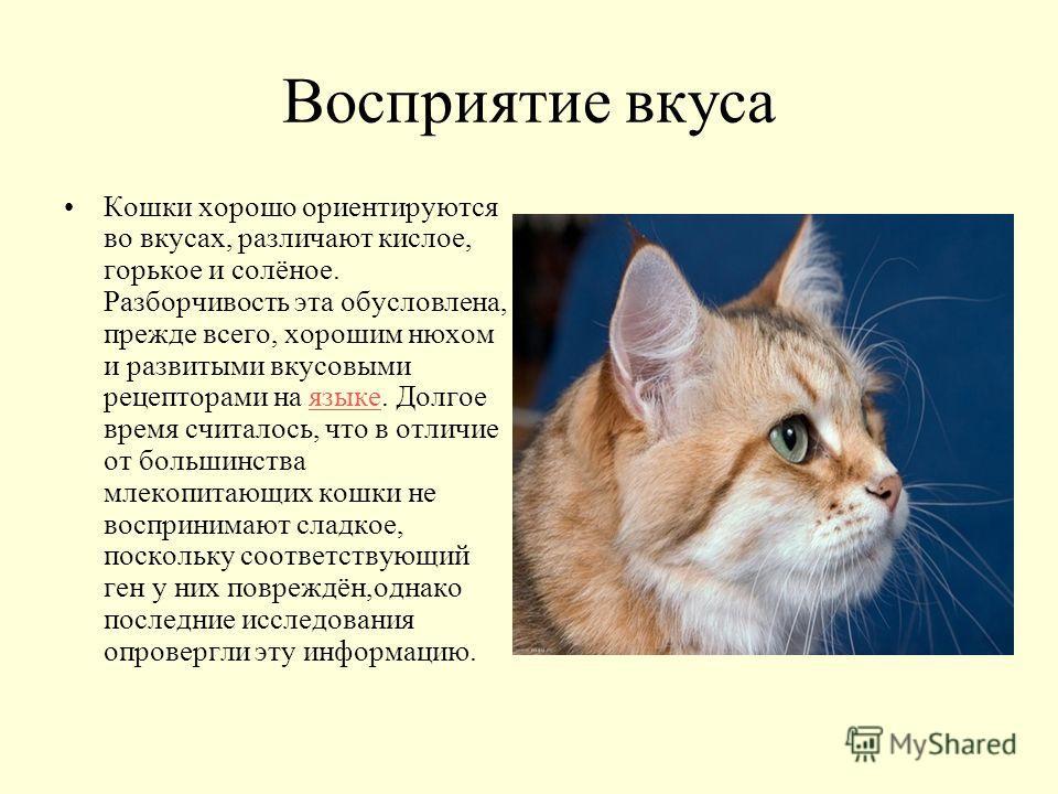 Восприятие вкуса Кошки хорошо ориентируются во вкусах, различают кислое, горькое и солёное. Разборчивость эта обусловлена, прежде всего, хорошим нюхом и развитыми вкусовыми рецепторами на языке. Долгое время считалось, что в отличие от большинства мл
