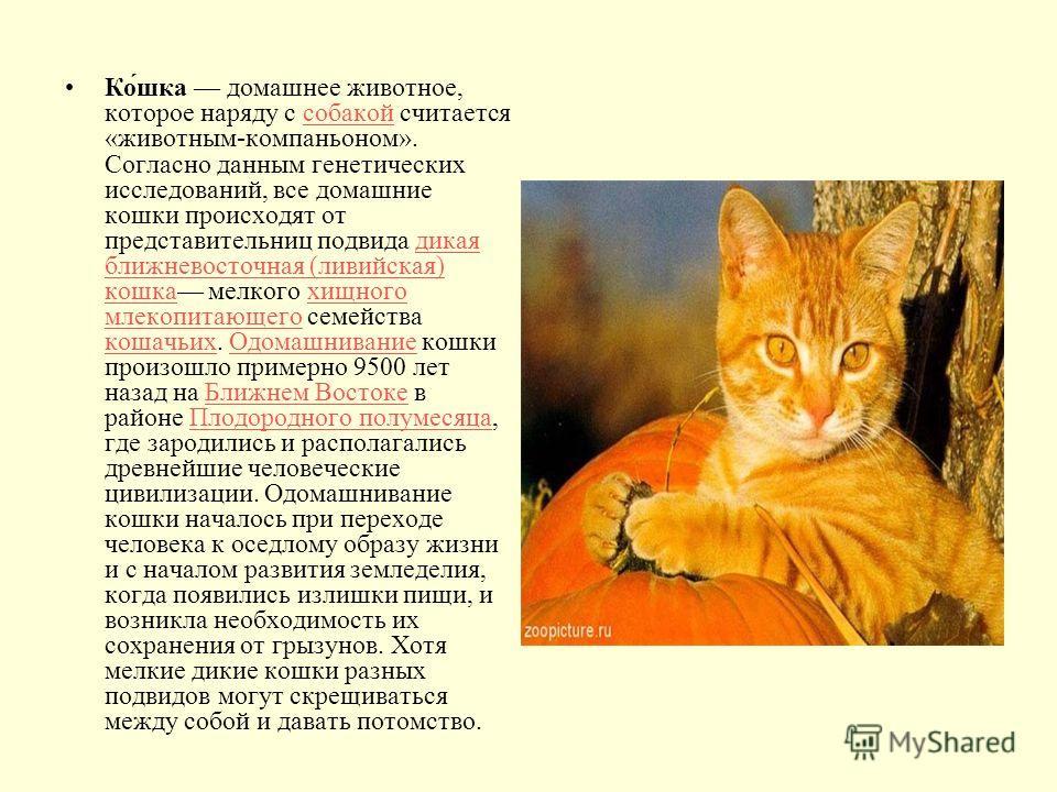 Ко́шка домашнее животное, которое наряду с собакой считается «животным-компаньоном». Согласно данным генетических исследований, все домашние кошки происходят от представительниц подвида дикая ближневосточная (ливийская) кошка мелкого хищного млекопит