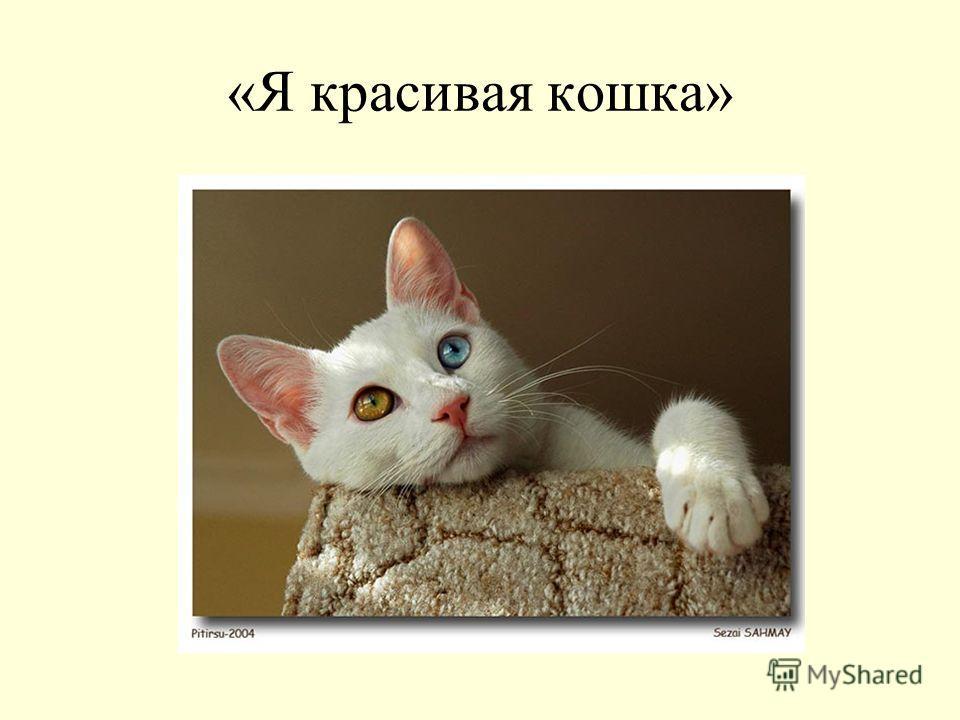 «Я красивая кошка»