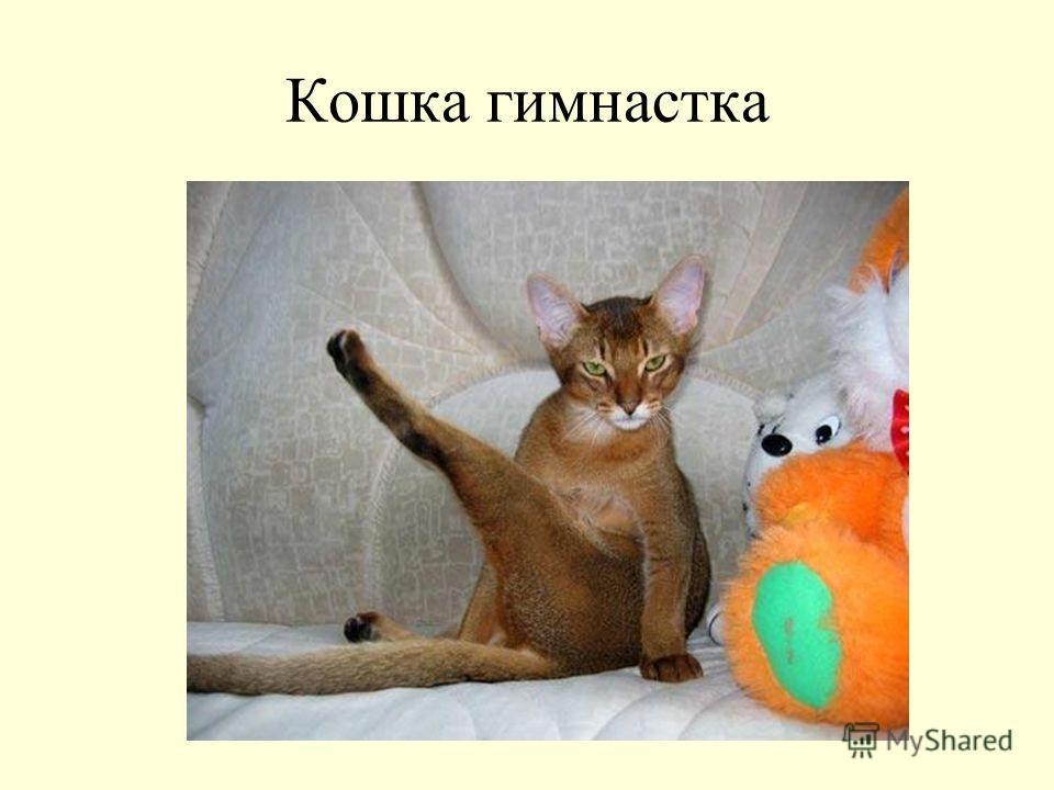 Кошка гимнастка