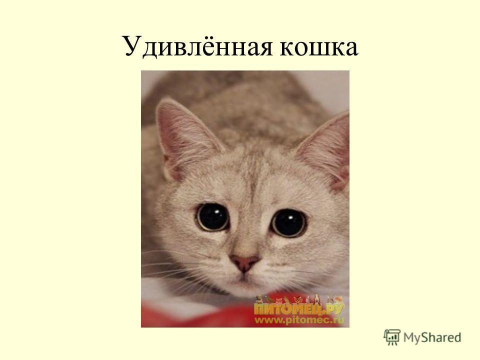 Удивлённая кошка