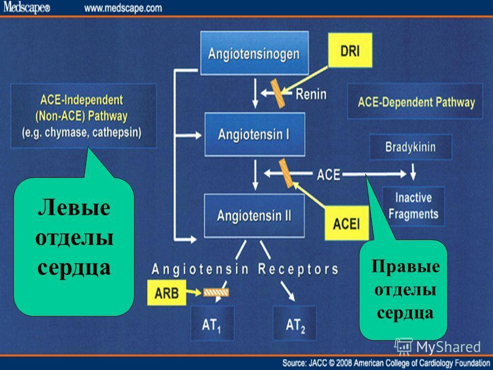 Левые отделы сердца Правые отделы сердца