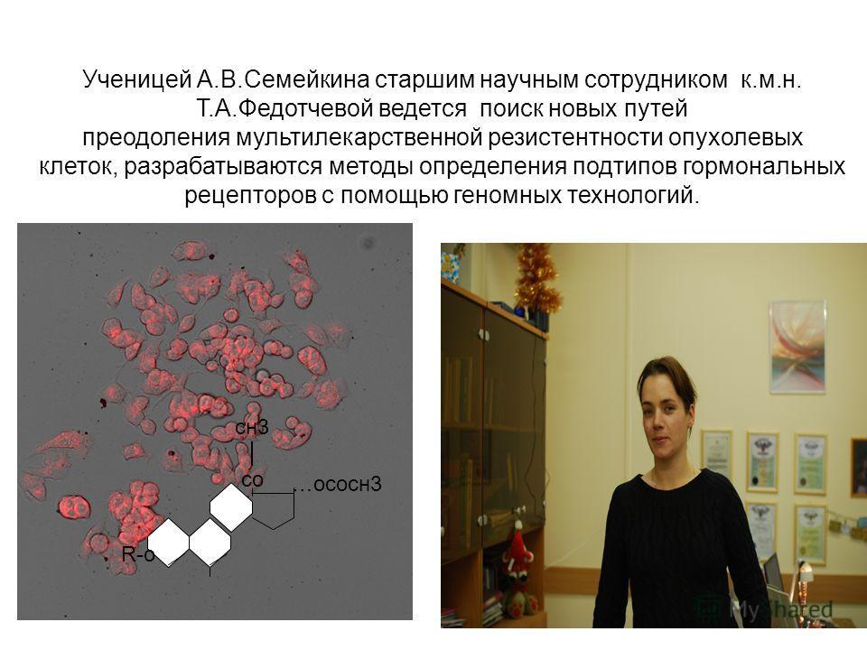 Ученицей А.В.Семейкина старшим научным сотрудником к.м.н. Т.А.Федотчевой ведется поиск новых путей преодоления мультилекарственной резистентности опухолевых клеток, разрабатываются методы определения подтипов гормональных рецепторов с помощью геномны