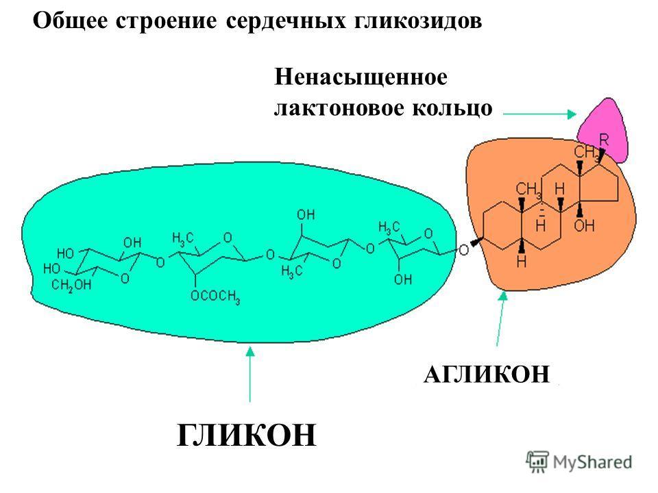 АГЛИКОН Ненасыщенное лактоновое кольцо ГЛИКОН Общее строение сердечных гликозидов