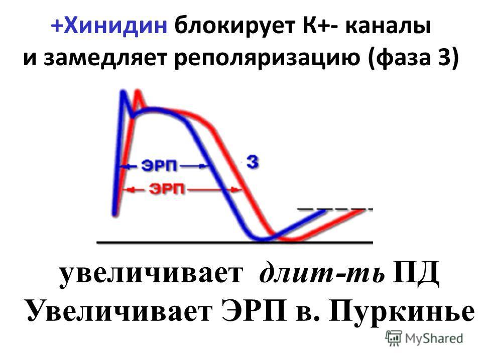 +Хинидин блокирует К+- каналы и замедляет реполяризацию (фаза 3) увеличивает длит-ть ПД Увеличивает ЭРП в. Пуркинье