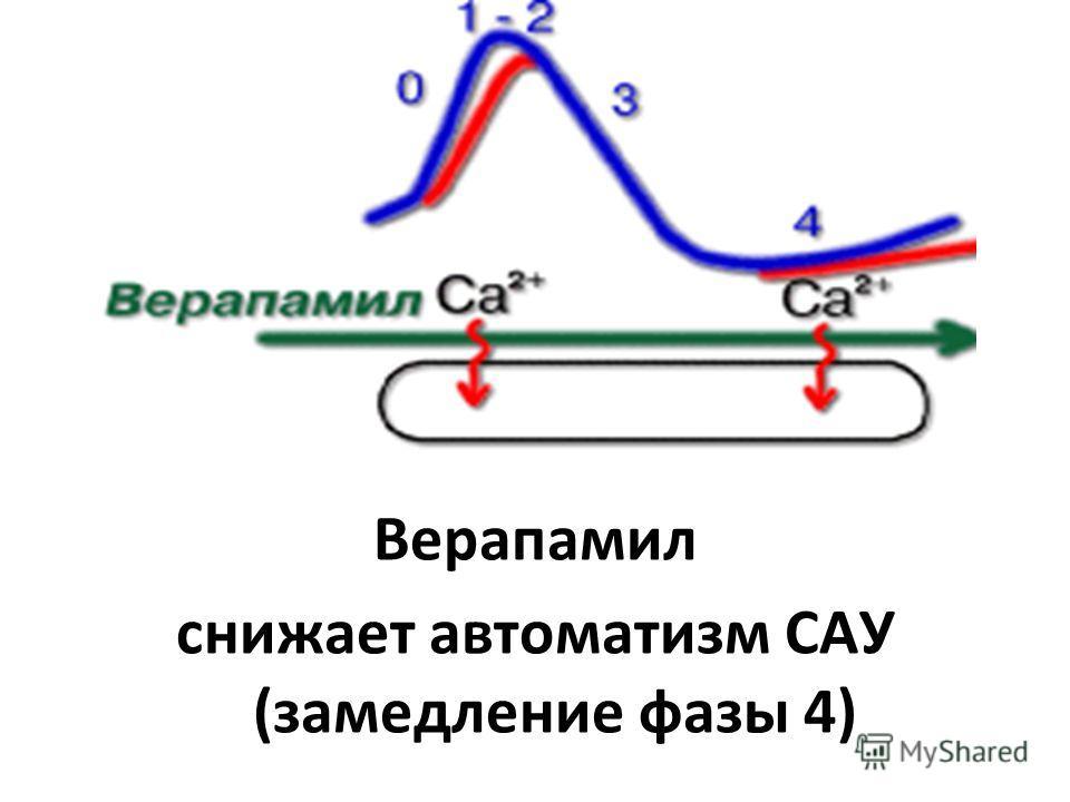 Верапамил снижает автоматизм САУ (замедление фазы 4)