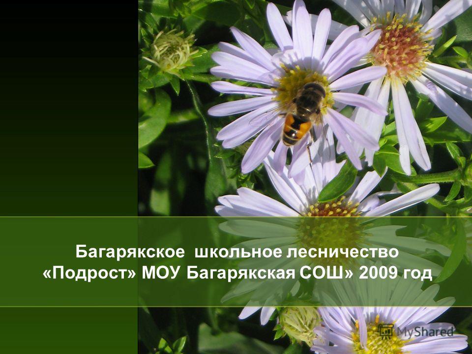 Багарякское школьное лесничество «Подрост» МОУ Багарякская СОШ» 2009 год