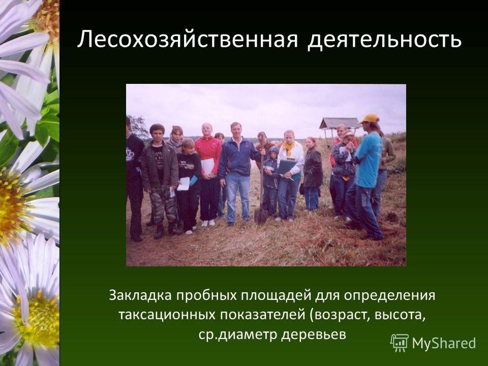 Лесохозяйственная деятельность Закладка пробных площадей для определения таксационных показателей (возраст, высота, ср.диаметр деревьев